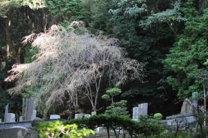 25-kyoto-oct-2015